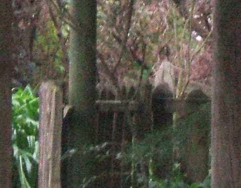 simulacrum, paranormal photo, New Zealand Strange Occurrences Society