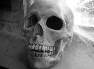spooky photo plaster skull in shed photo by J.Gilberd