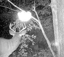 Trailcam photo by Rich Huerth, Wisconsin USA, Paranormal photo, New Zealand Strange Occurrences Society, photo is copyrighty